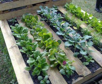 DIY Effortless Garden Boxes